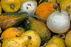 Mixed colorful pumpkins 7 Stock Photo