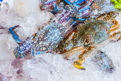 Mixed crab for sale on a market Royalty Free Stock Photos