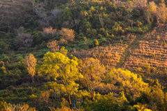 Mixed Deciduous Forest Royalty Free Stock Photo