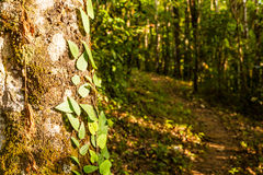 Mixed Deciduous Forest Royalty Free Stock Images