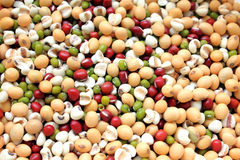 Mixed dry beans Royalty Free Stock Image
