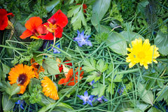 Mixed Edible Flowers and Herbs Stock Photos