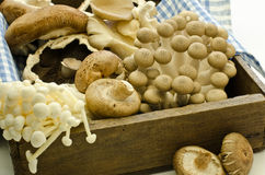 Mixed exotic mushrooms Stock Photo