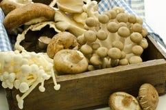 Mixed exotic mushrooms Stock Photo