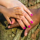 Mixed family concept. Three hands of the mixed race family on the tree bark - baby, mother and father at sunset light royalty free stock photography