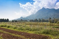 Mixed farming, agricultural land preparation on the plateau stock photo
