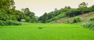 Mixed farming Agriculture Royalty Free Stock Images