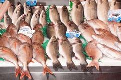 Mixed fish Royalty Free Stock Photography