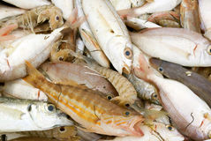 Mixed fish at market Royalty Free Stock Photo