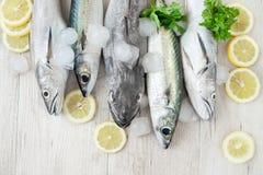 Mixed Fish Stock Photo