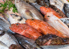 Mixed fish for sale on a market Royalty Free Stock Photos