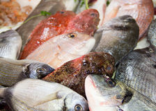 Mixed fish for sale on a market Royalty Free Stock Photo