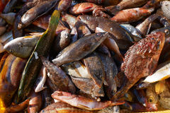 Mixed fish for sale on market Stock Images