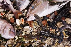 Mixed fish and sea food Royalty Free Stock Image