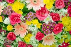 Mixed flora Royalty Free Stock Photos
