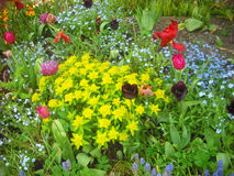 A mixed flower border. Typical of a border in an English country cottage garden Stock Photos
