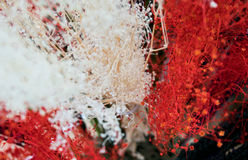 Mixed flower. White and red flower for valentine theme Stock Images