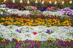 Mixed flowerbed Royalty Free Stock Photos