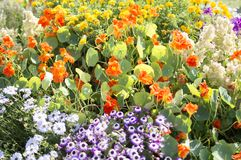 Mixed flowers in flowerbed Royalty Free Stock Photos