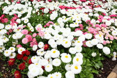 Mixed Flowers. Mixed flower beds in Cesky Krumlov Castle Garden stock image