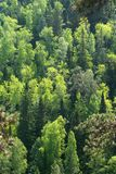 Mixed forest. View of mixed forest from the top Royalty Free Stock Images