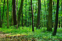 Mixed forest stock photos