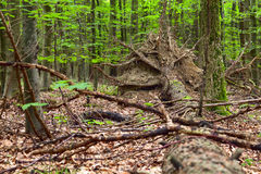 Mixed forest Royalty Free Stock Photography