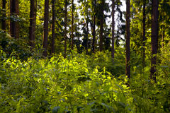 Mixed forest Royalty Free Stock Images