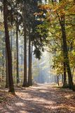 Mixed forest as nature and ecosystem in the sunshine. Path through a mixed forest as nature and ecosystem in the sunshine in autumn royalty free stock photos