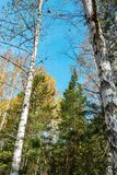 Mixed forest in autumn Royalty Free Stock Photography