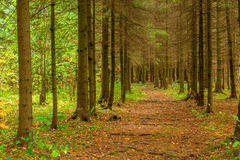 Mixed forest in autumn. Stock Photos
