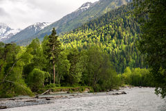 Mixed forest on the bank of a mountain river against the background of the Caucasus Mountains Royalty Free Stock Image