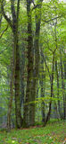 Mixed forest stock photography