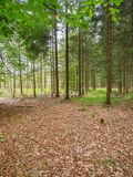 Mixed forest with brown leaves. View into a autumnal mixed young forest with small glade and brown leaves on the foreground Stock Photography
