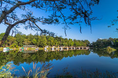 Mixed forest and bungalow reflected in the lake Stock Images