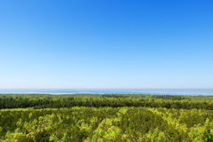 Mixed forest of coniferous and deciduous breeds. view from the top Royalty Free Stock Photography