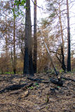 Mixed forest after a fire Royalty Free Stock Images