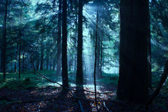 Mixed Forest in the Morning Light Royalty Free Stock Photos