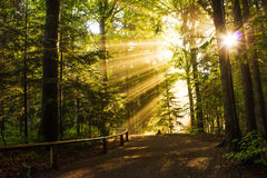 Mixed Forest in the Morning Light Royalty Free Stock Photography