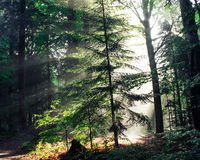 Mixed Forest in the Morning Light Stock Photography