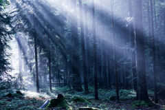 Mixed Forest in the Morning Light Stock Photos