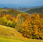 Mixed forest  Mountains in autumn. Stock Photo