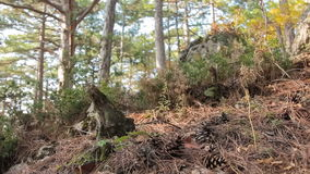 Mixed forest in mountains in autumn stock footage