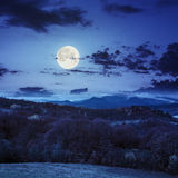 Mixed forest near valley in mountains  on hillside at night Stock Photography