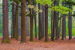 Mixed forest with old tall trees royalty free stock photos