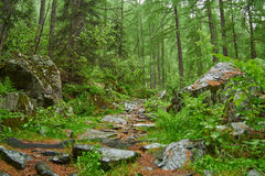 Mixed forest with path of stones Royalty Free Stock Photography