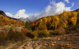 Mixed forest. Royalty Free Stock Images