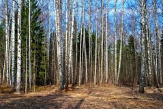 Mixed forest in spring stock photos