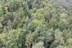 Mixed Forest. From the top. Europe, Czech Republic, north Bohemia region stock image