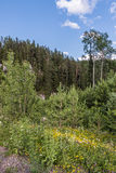 Mixed forest in the Ural Mountains. Stock Photo